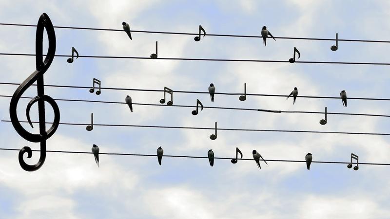 カラオケ音程練習には音程バーつきアプリを選ぶ
